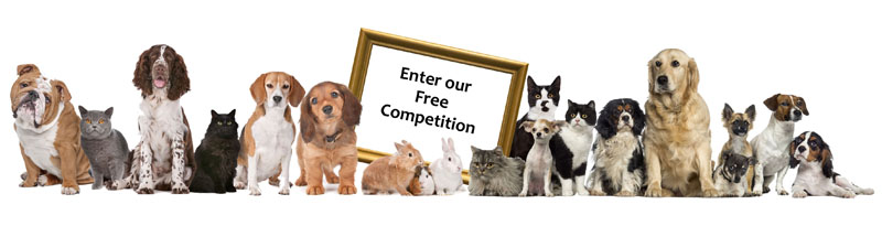 National Pet Month competition with Village Photography
