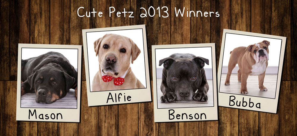 Cute Petz Competition, Gateshead, Newcastle, South Shields, Village Photography Hebburn