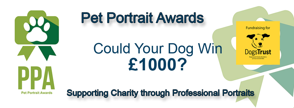 Pet Portrait Awards, Village Photography, Newastle