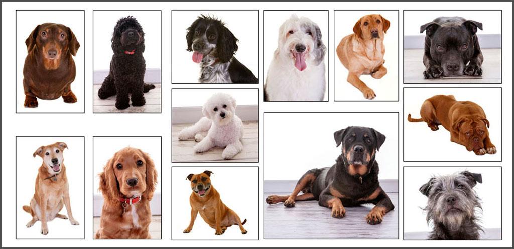 Pet Portraits image 2